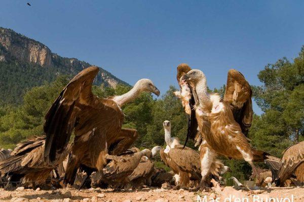 birdwatching-mas-bunyol